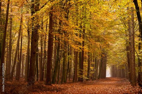 Fototapety do jadalni pas-piasek-z-drzew-jesienia