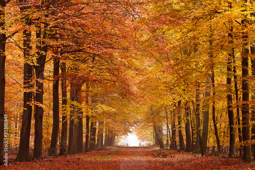 Fotografie, Tablou Sand lane with trees in autumn