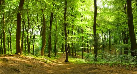 Fototapeta Las Waldweg im Sommer