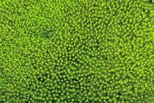 Moss Green Background