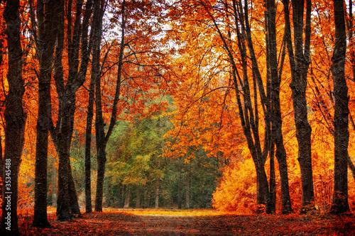 Poster Deep brown Autumn park in oil painting style