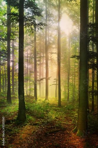 Tuinposter Weg in bos Forêt féérique