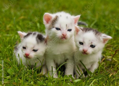 Keuken foto achterwand Kat black and white kittens