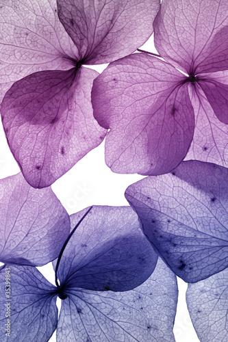 kolorowy-kwiat-platek-zblizenie