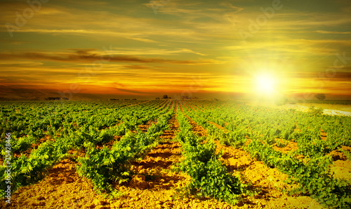 Papiers peints Vignoble Bright sunset at vineyard