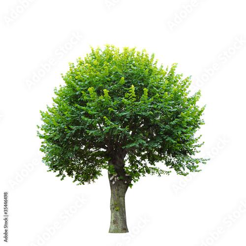 zielone-drzewo-na-bialym-tle