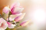 Mit rosa Magnolie im Hintergrund