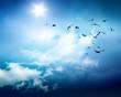 Leinwandbild Motiv birds sky background