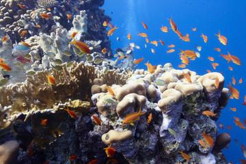 Fototapeta na wymiar Korallenriff mit Fischen