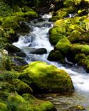 Mały strumień płynie między mchem na kamieniach - 35550838