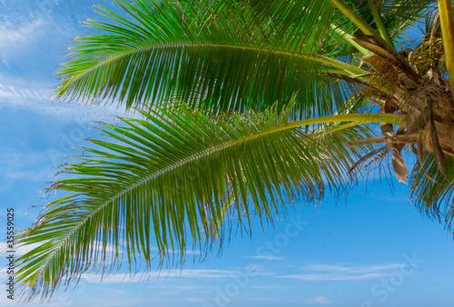 Poster Palmier Jungle Leaves Paradise