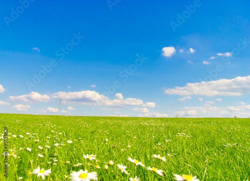Staande foto Lente Flowers bloom Beauty Horizon