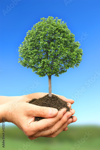 Photo Stands Roe Hand holding green tree in nature