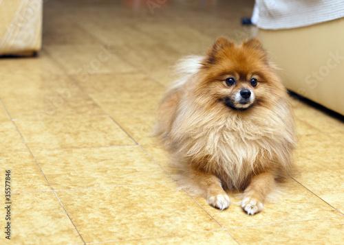 Fotografija  cagnolino carino
