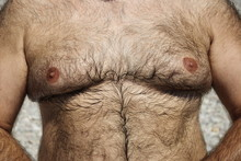 Hairy Chest Of Overweight Man