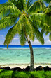 Single palm tree overlooking blue lagoon