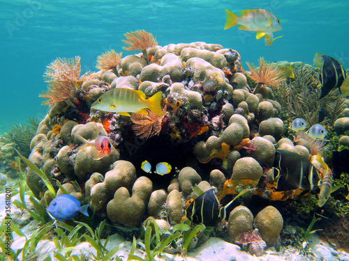 Poster Coral reefs Coral reef with colorful tropical fish and marine worms, Caribbean sea, Costa Rica, Central America