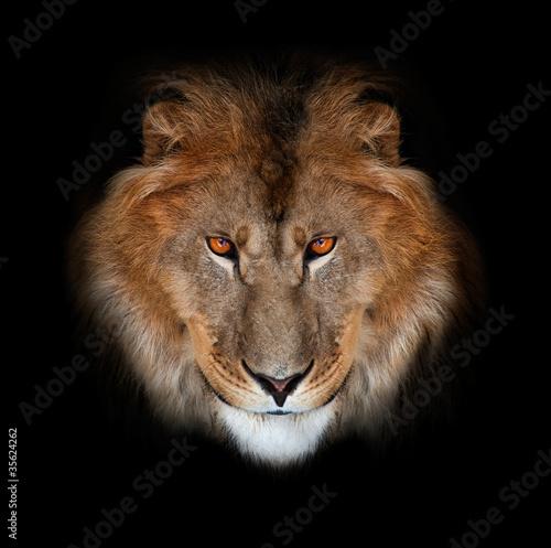 Staande foto Leeuw noble lion on a black background