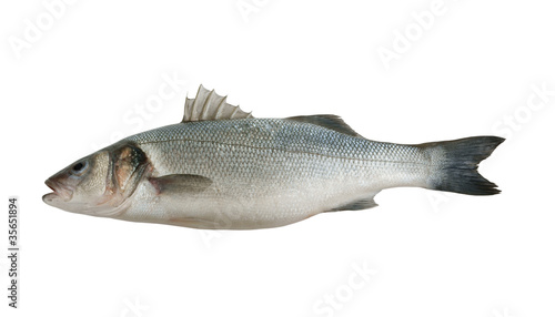 Poster Fish Fresh seabass fish isolated on white background