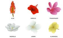 Fleurs Océaniennes