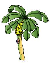 Banana Tree_1