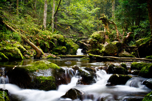 Fototapety, obrazy: Herbstwald
