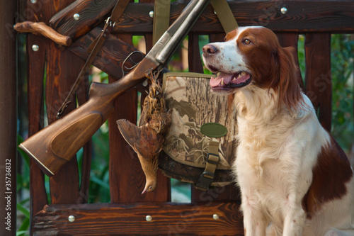 Foto  Gun dog near to shot-gun and trophy, outdoors