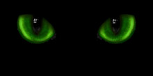 Two Green Cat Eyes