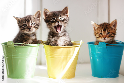 Photo  Funny kittens
