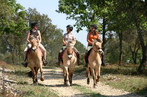 Photo sur Aluminium Equitation Equitation balade - Riding