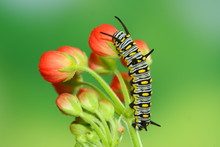 Red Flower And Cute Caterpillar