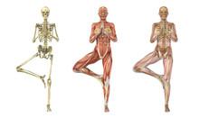 Yoga Tree Pose - Anatomical Overlays