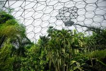 Tropical Rainforest Vegetation Inside A Manmade Bio-dome