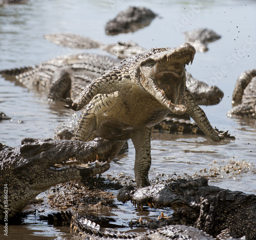 La pose en embrasure Crocodile Attack crocodile