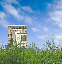 Dollar Growing From Grass