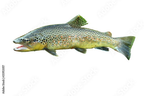 Common trout Fototapeta