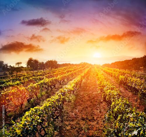 Foto-Leinwand ohne Rahmen - Vineyard landscape (von mythja)