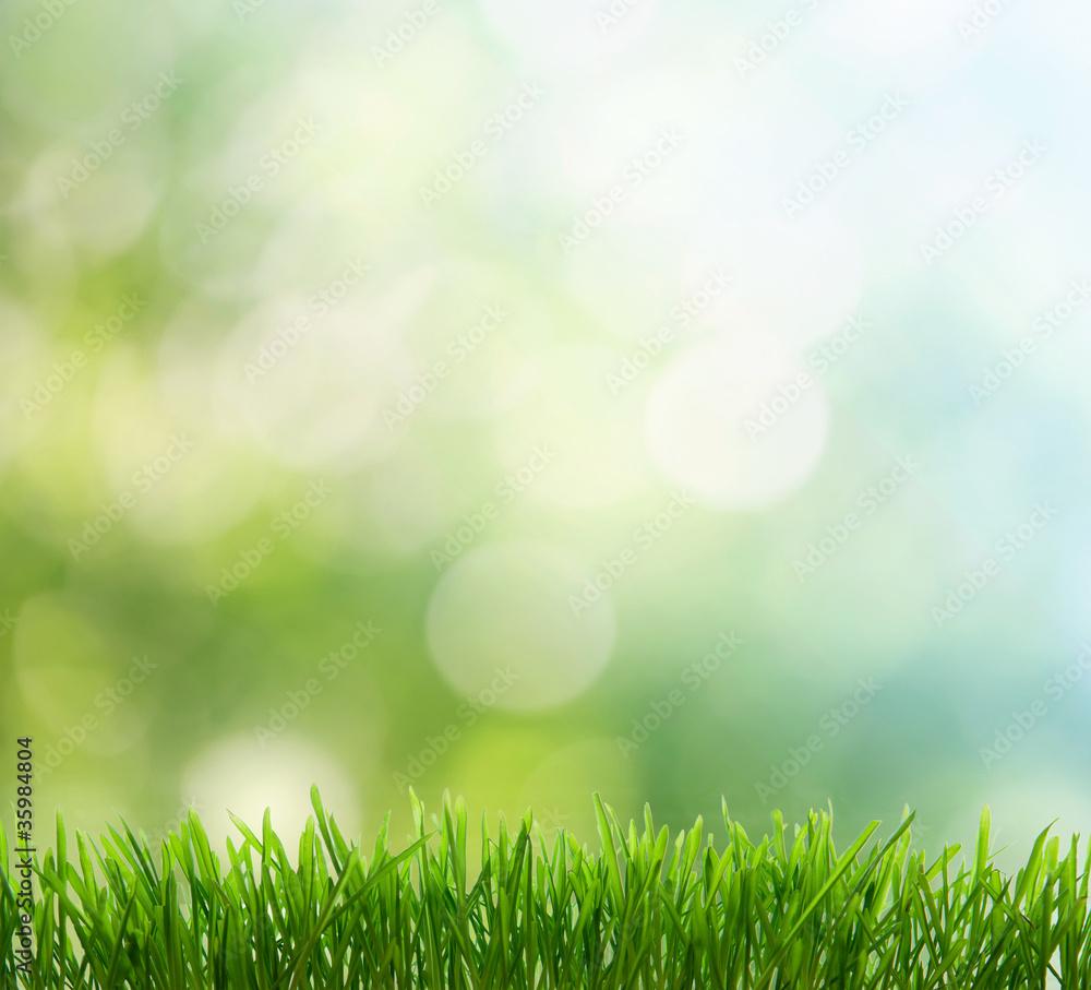 Fototapety, obrazy: spring background