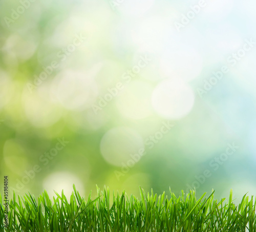Photo sur Toile Herbe spring background