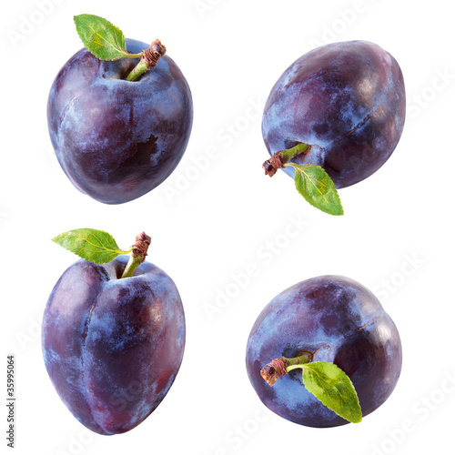 plum Canvas Print