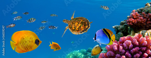 Poster Sous-marin Underwater panorama with turtle, coral reef and fishes