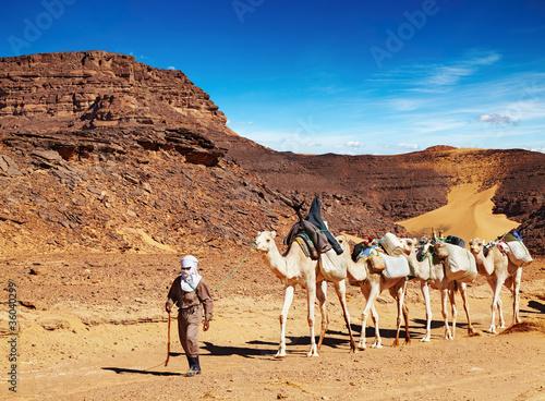 Obraz na plátne Camels caravan in Sahara Desert, Algeria