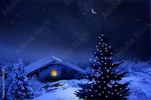 Foto-Doppelrollo - Weihnachtswald (von by-studio)