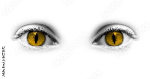 Vászonkép Yeux jaunes catwoman - fond blanc