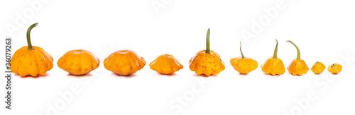 Ten bush pumpkins abreast on white background Wallpaper Mural