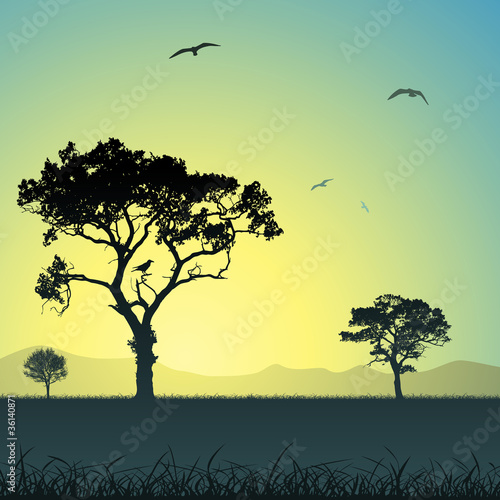 Foto op Canvas Pool A Country Meadow Landscape with Trees and Birds