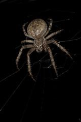 The big tarantula on a web at night
