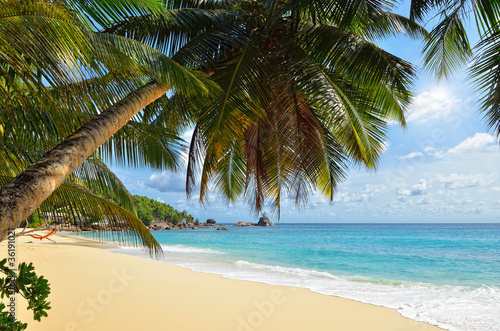Foto op Canvas Tropical strand Palm over tropical beach
