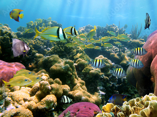 Poster Sous-marin Colorful coral reef with tropical fish underwater Caribbean sea