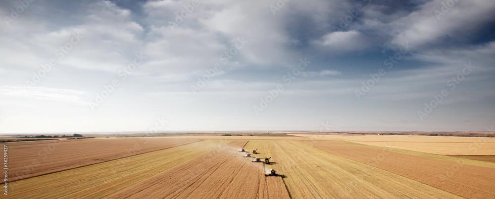 Fototapety, obrazy: Harvest Aerial Landscape